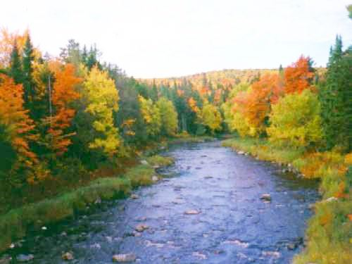 Nashwaak River in the fall